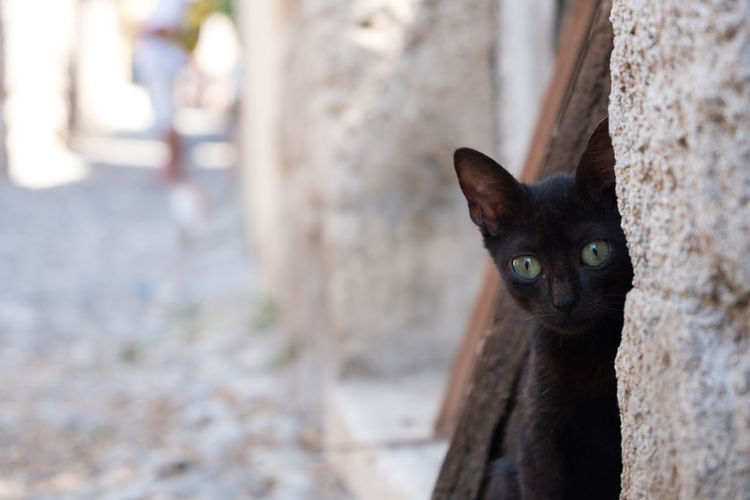 Close-up portrait of black cat by wall