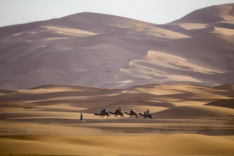 Group of people riding horse in desert