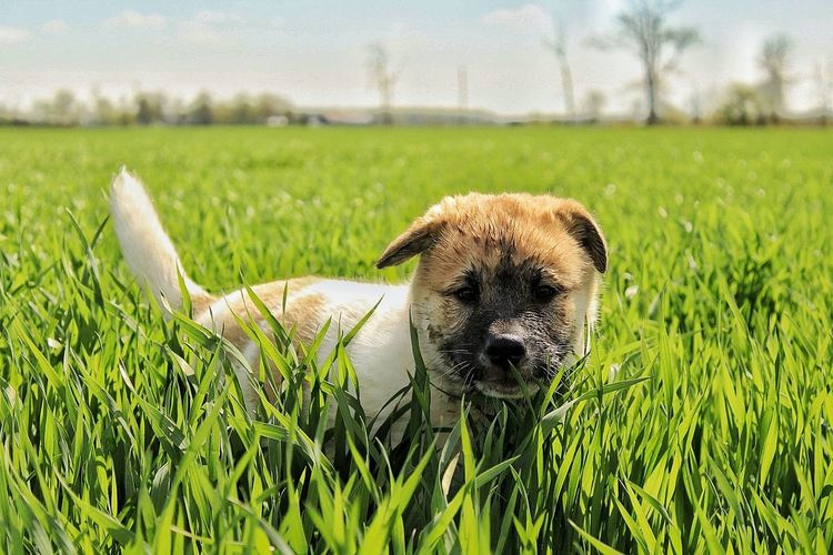 Grass Focus On Foreground Nature Sky Day Puppy Fluffy Portrait Dog Spring Muddy One Animal Animal Pets Outdoors Mammal Rural Scene No People Close-up Domestic Animals Animal Themes First Eyeem Photo