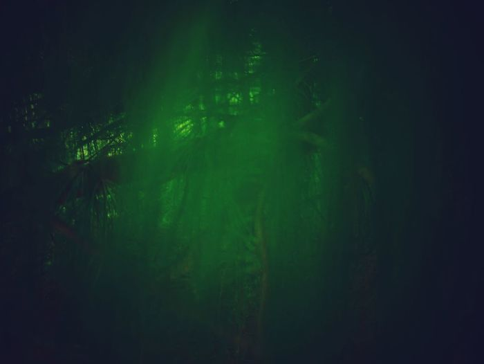 Green Color Tree Plant Forest Beauty In Nature Growth Land No People Tranquility Nature Outdoors Night Foliage Tranquil Scene Mystery Lush Foliage WoodLand Environment Dark Bamboo - Plant