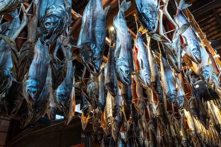 Low angle view of fish for sale at market