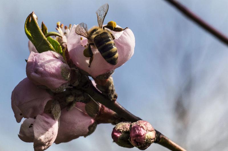 bee Beauty In