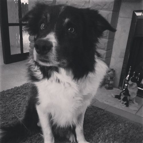 I know you've just got in but..... play? Dog Border Collie