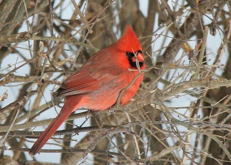 bird nature winter