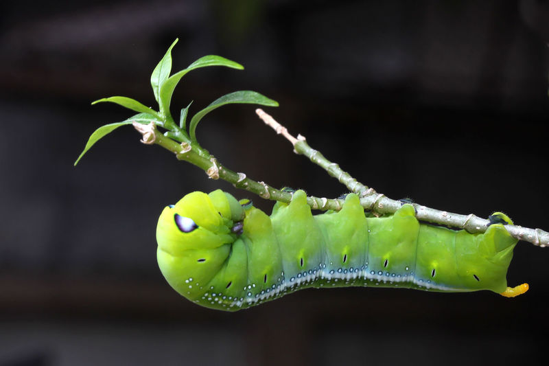 Animal Themes Animal Wildlife Animals In The Wild Beauty In Nature Close-up Day Focus On Foreground Fragility Freshness Green Color Growth Insect Larva  Leaf Nature No People One Animal Outdoors Plant