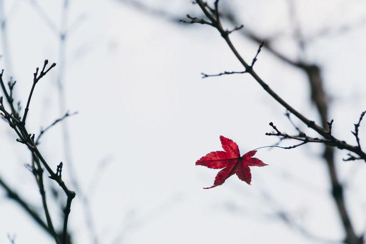 Last Leaf #Hope