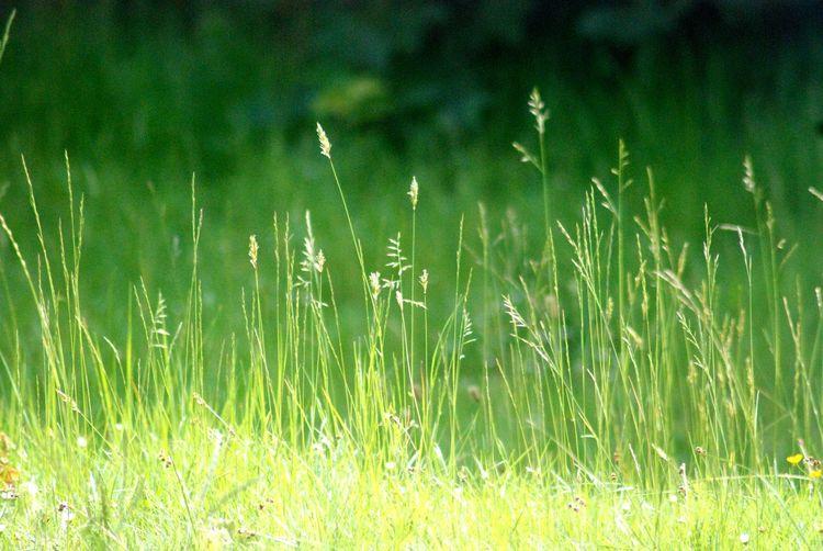 """ Grassland """