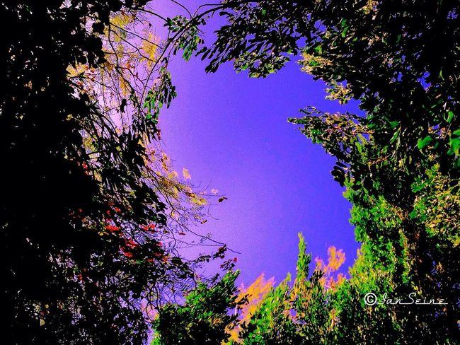 Trees TreePorn Purple Spring Has Sprung