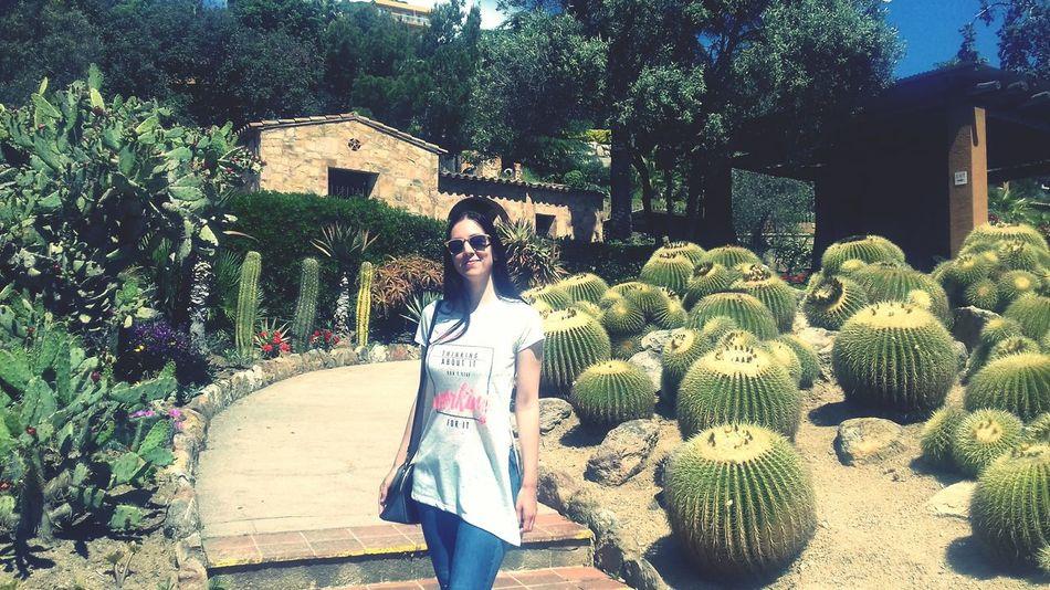 Garden Cactus Cactus Flower Cactuslover Cactus Collection Plants Barcelona SPAIN Sommergefühle
