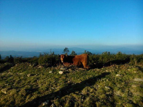 Mountain View Pontevedra Nature