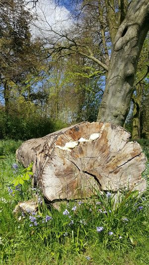 Day Grass Nature No People Outdoors Close-up Animal Themes Plant Flower Nature Beauty In Nature Tree Fragility Fallen Tree Felled Tree Tree Trunk Fungai Nature Reclaiming
