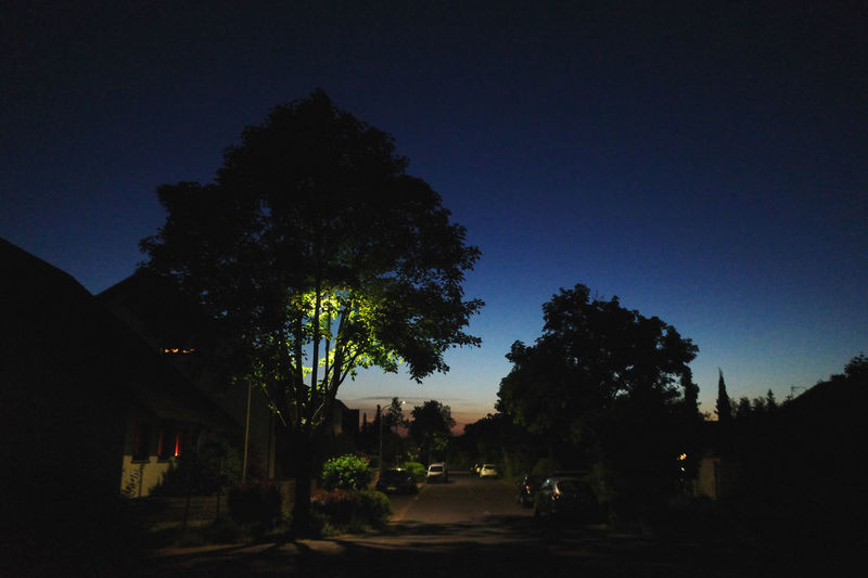 Silhouette trees by street against sky at night