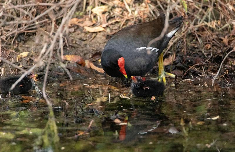 Bird drinking water in lake