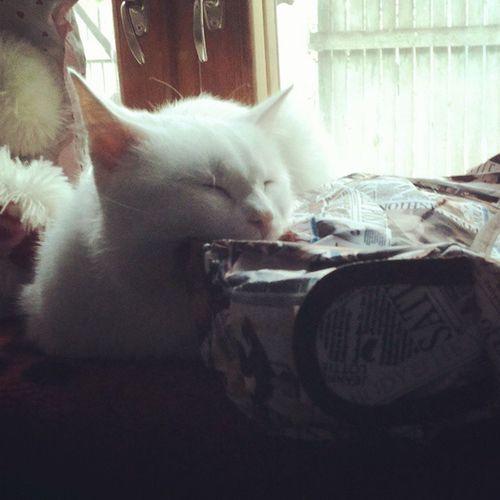 Я не я буду, если не запилю в инстаграм хоть две фотки кота. У него будет самый большой фотоальбом. Больше чем у всех нам. Кроме пуза конечно. фотоохота_на_кота , Cats , Aww