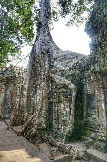 TA Prohm temple, Angkor Wat, Kampuchea, 'Tomb Raider' shooting Great Outdoors Photography The Great Outdoors - 2015 EyeEm Awards Angkor Wat Hello World Traveling Sony NEX First Eyeem Photo
