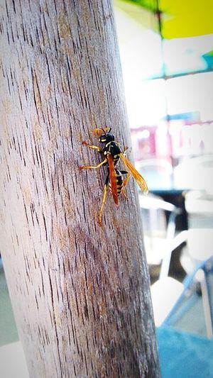 Closeupshot Nature Photography Summer Vibes The Simple Things Enjoy Life Enjoy Nature