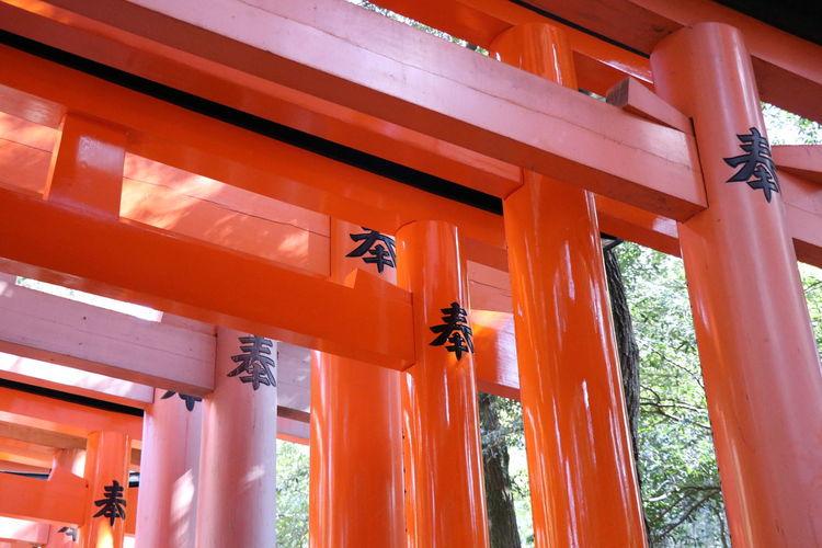 伏見稲荷大社 伏見稲荷 神社 千本鳥居 鳥居 Shrine Architecture Built Structure Architectural Column No People Day Red Low Angle View Outdoors