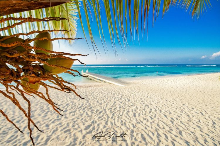 Sea Beach Horizon Over Water Sand Blue Sky Idyllic Vacations Tranquil Scene Tropical Climate Nature Travel Destinations Clear Sky Beauty In Nature Sunlight Outdoors No People Palm Tree Tranquility Summer