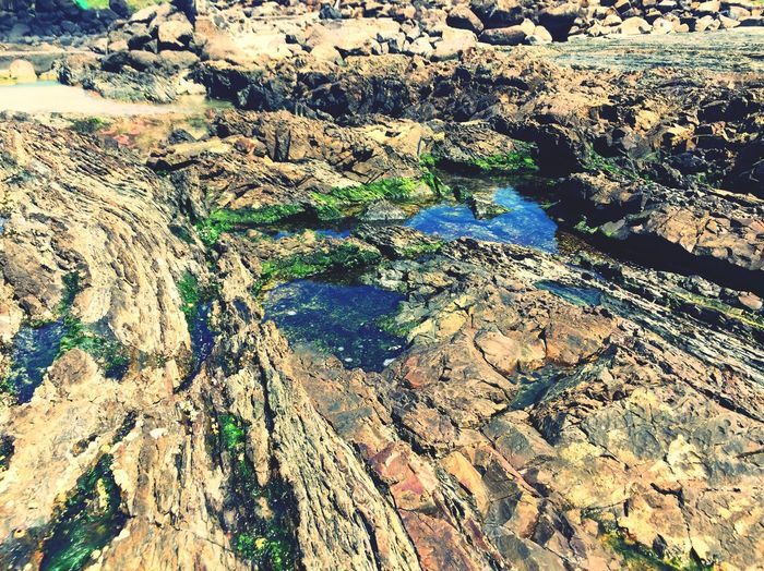 Sea Rocks Snapper Rocks Mars Water_collection Dramatic Alien Landscape Sea Grass Moss & Lichen Surfing Surfers Paradise