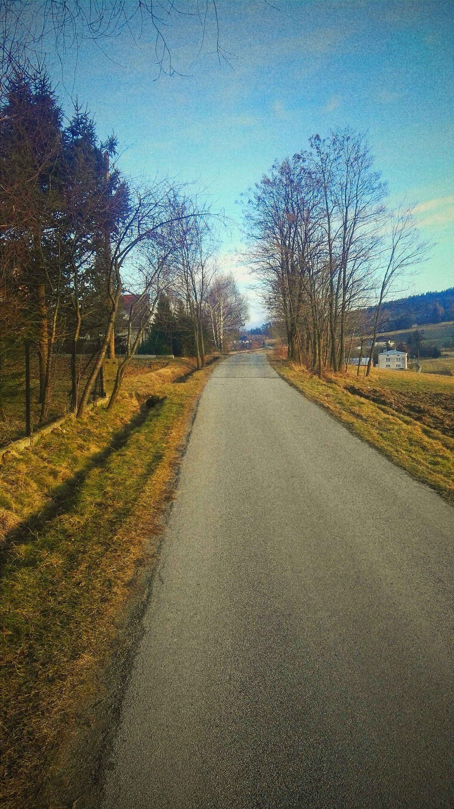 the way forward, diminishing perspective, vanishing point, road, tree, transportation, tranquility, tranquil scene, sky, country road, empty road, clear sky, surface level, landscape, nature, long, asphalt, field, bare tree, road marking