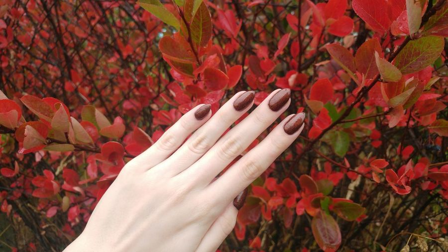 Cropped hand of woman showing nail polish against plants in park during autumn