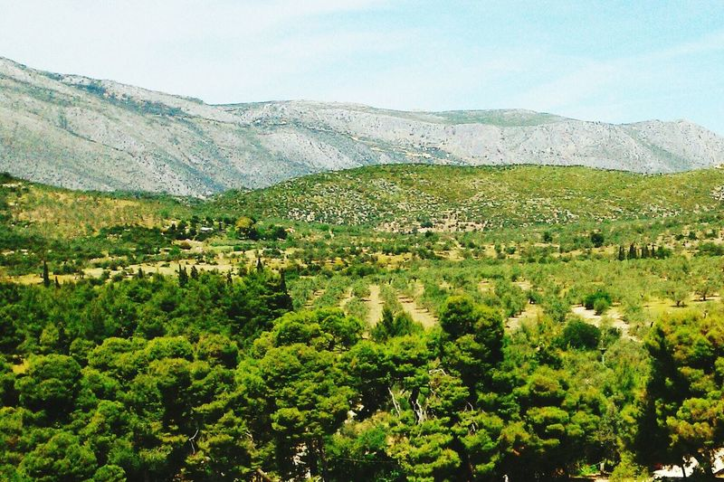 Greece Landscapes Trees And Nature Green Nature Humanless Relaxing The Great Outdoors With Adobe Green Color Greek Beauty Greek Nature Peaceful View Alone Time Chilling Outsiide
