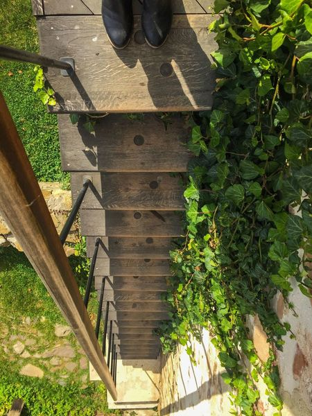 Plant Wood - Material Leaf Wooden Growth Narrow Green Color Brown Day Outdoors Growing No People The Way Forward Green Stairs Stairway Poison Ivy Steps Feet Top View Feet View Getting Down