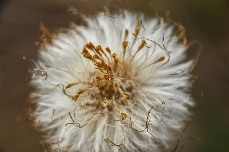 Flower Fragility Flower Head Petal Freshness Nature Softness Beauty In Nature White Color Close-up Growth Stamen Selective Focus Pollen Blossom Springtime No People Uncultivated Day Plant Wassergarten Nature_collection Garden Summer Beauty In Nature