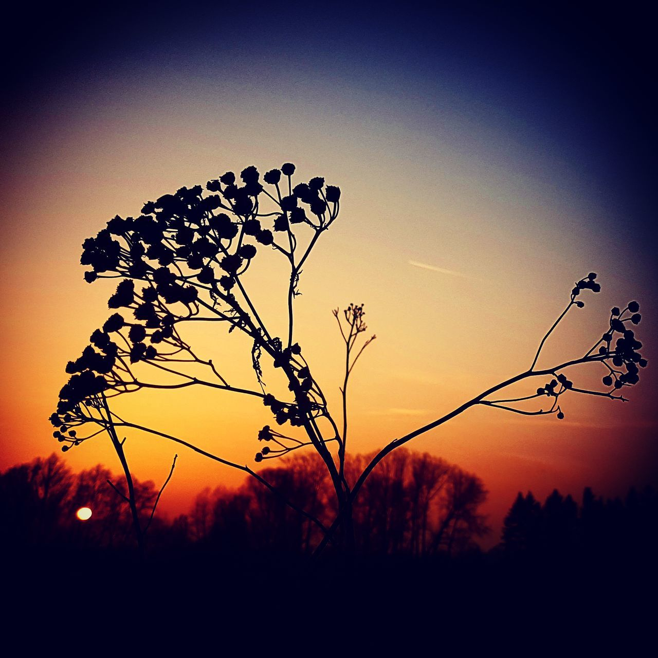 sunset, silhouette, growth, nature, sun, plant, outdoors, sky, landscape, no people, beauty in nature, tree