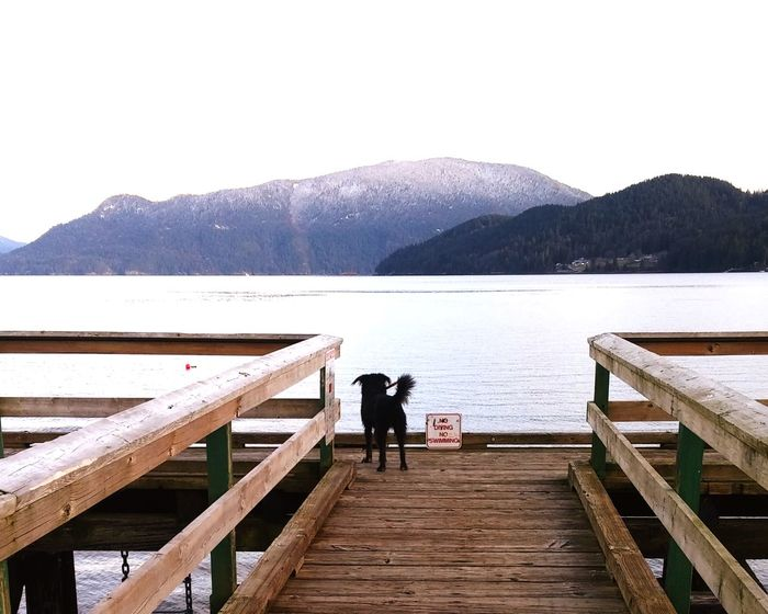Waiting for the next ship Dogs Of EyeEm Ocean View Sea And Sky Seascape WestCoast BC, Canada EyeEm Gallery Dock Winterbeach Pier Two People Pier Railing Adult Jetty Full Length Togetherness Wood - Material Rear View Nature Water Tranquility Scenics Outdoors