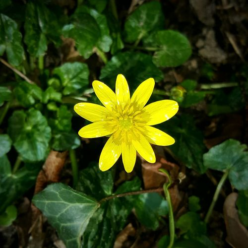 Yellow Close-up
