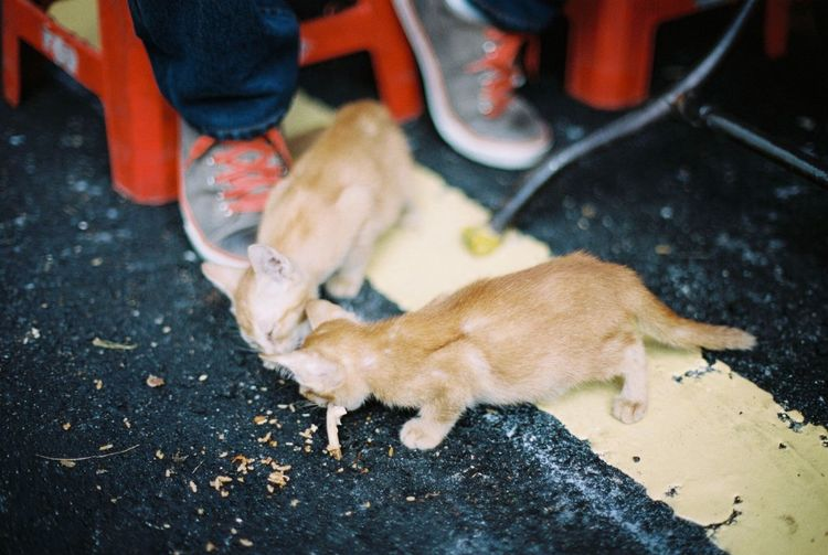 Two Is Better Than One Cat Kitten Shoes Sneakers Road Roadside Eating Film Lomography Strays Sharing  Film Photography Filmisnotdead Portra 400 Streetphotography