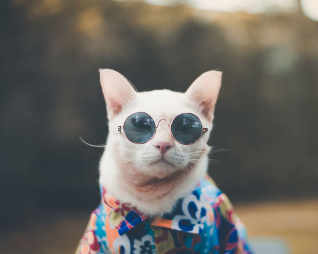 Portrait of Hipster White Cat wearing sunglasses and shirt,animal fashion concept. Portraits Cat Close-up Domestic Domestic Animals Domestic Cat Fasion Feline Focus On Foreground Mammal One Animal Pet Pets Portrait Sunglasses Vertebrate Vintage Whisker EyeEmNewHere The Modern Professional