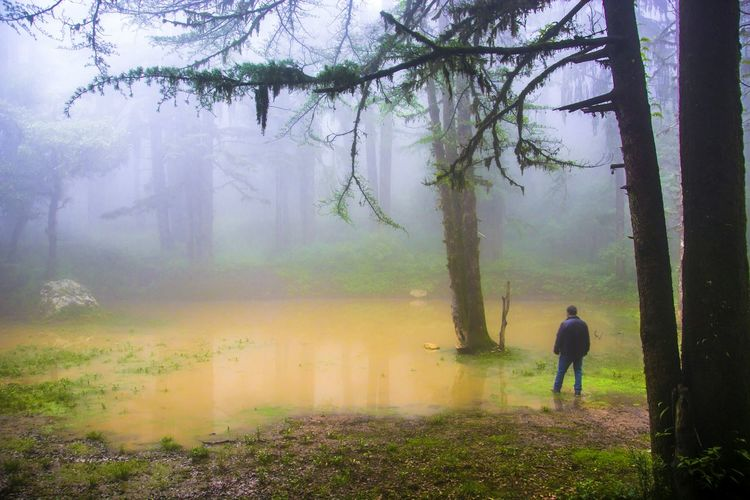 Rear view of man on field in forest