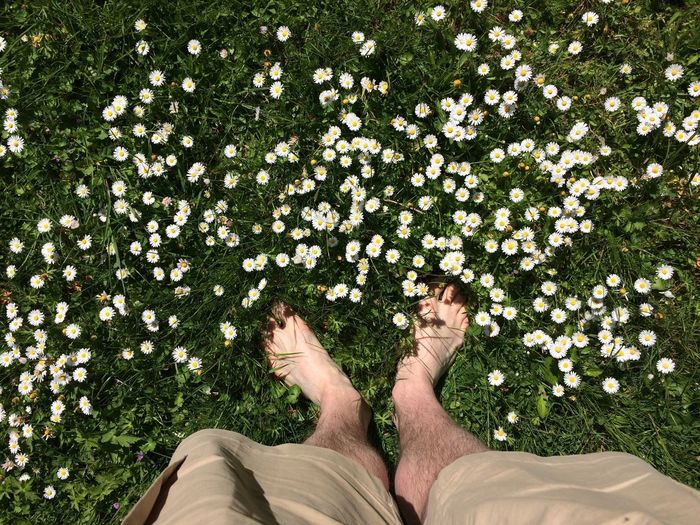 Casual Clothing Day Field Flower Fragility Grass Green Color Growth Human Foot Leisure Activity Lifestyles Low Section My Feet Nature Outdoors Part Of Person Personal Perspective Plant Relaxation Standing