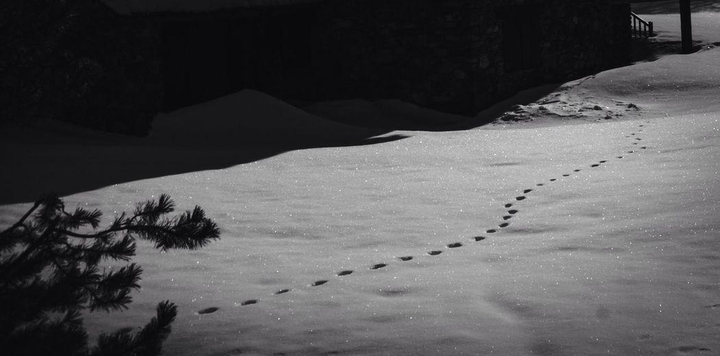 Steps Enjoying Life EyeEm Nature Lover Exploring Winter White By CanvasPop