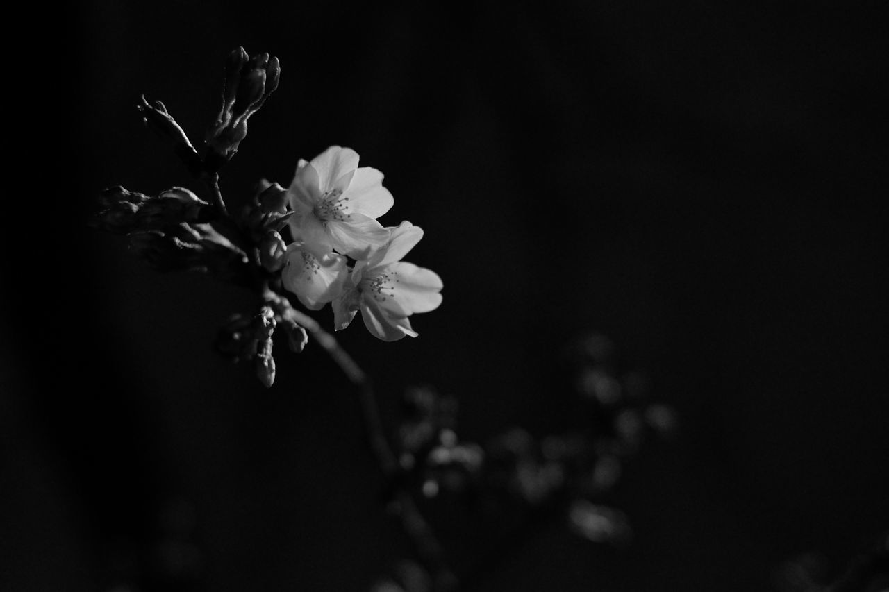 Close-Up Of Flowers On Twig At Night