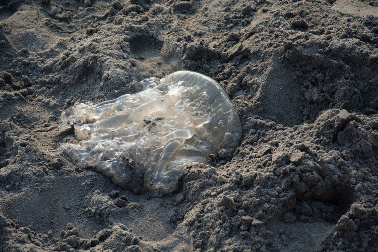 Dead jelly fish spotted @_@ Sand Beach Jellyfish No People High Angle View Sea Life Day Nature Backgrounds Close-up Sea Full Frame Animals In The Wild Animal Themes Outdoors UnderSea . Subic Bay Whiterocksbeach
