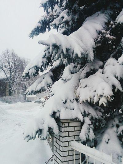Snow Cold Temperature Winter Tree Snowing