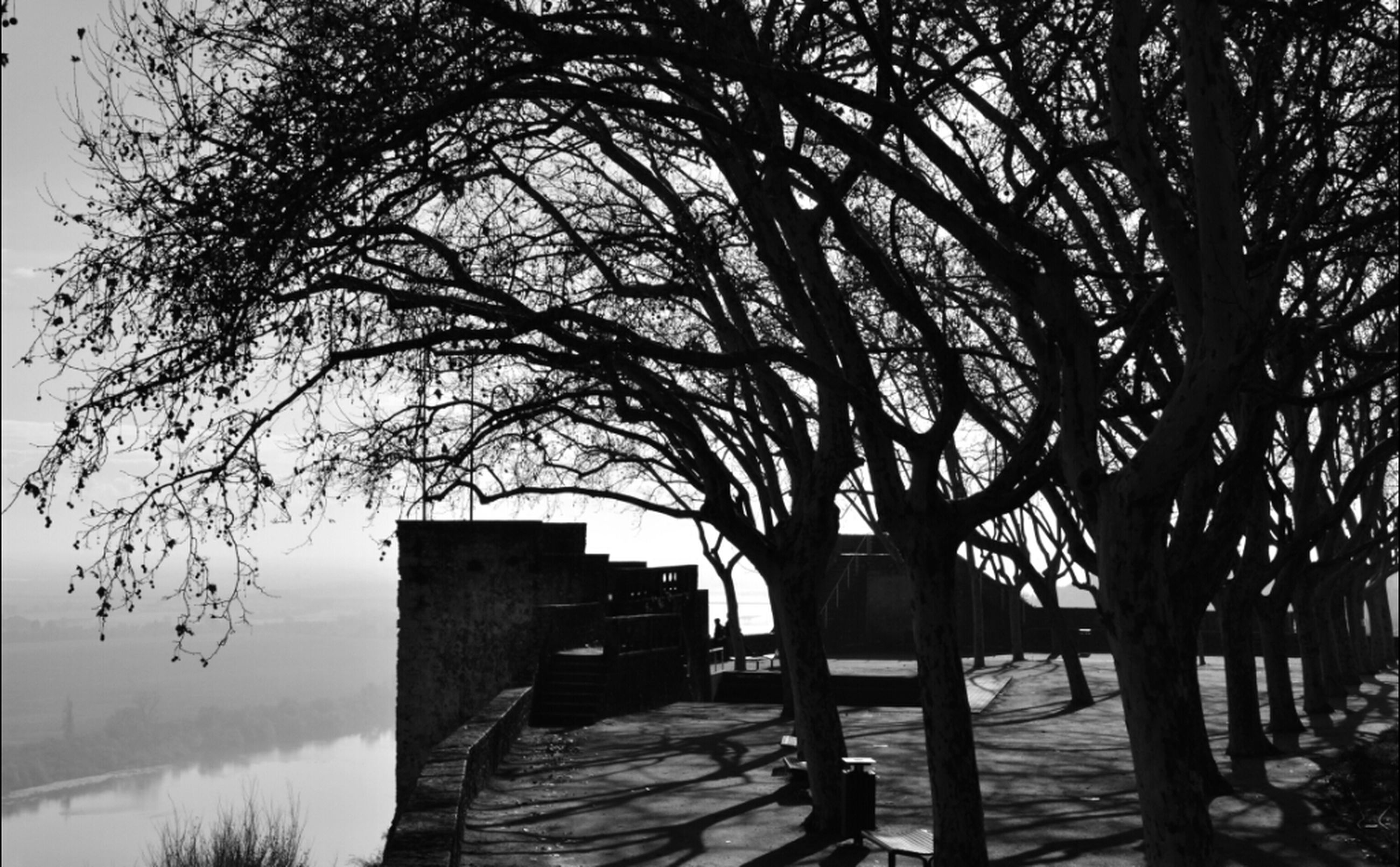 tree, water, tranquility, bare tree, tranquil scene, silhouette, nature, sunset, scenics, built structure, branch, wood - material, beauty in nature, bench, lake, sunlight, sky, empty, the way forward, absence