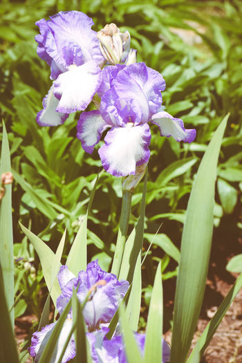 Beauty In Nature Flowers Nature Plant Plants Plants And Flowers Purple Flowers