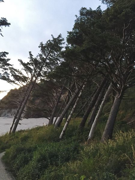 Leaning Trees Landscape Tranquil Scene Beach Nature Beauty In Nature Scenics Grass Growth Outdoors Sky Tree Trunk Scenery Trees Shapes In Nature  Backgrounds WoodLand Perspectives On Nature