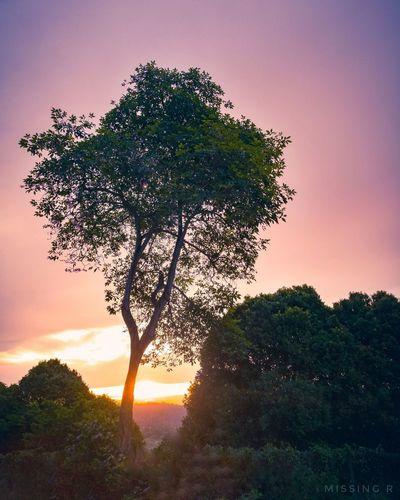 Single Tree No