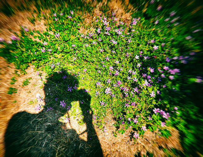 Blurred Beauty In Nature Flowering Plant Flowers Fragility High Angle View Selective Focus Self Portrait Silhouette_collection Silhoutte Photography