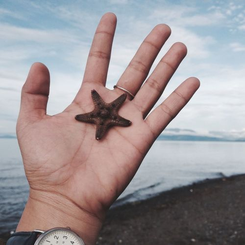 Cropped image of hand holding starfish at beach against sky
