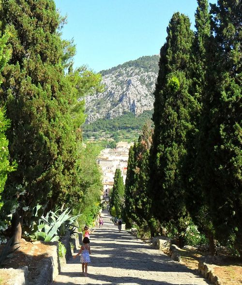 Tree Steps Walking The Way Forward Clear Sky Men Growth Full Length Green Color Footpath Person Staircase Nature Day Tranquil Scene Tranquility Walkway Pathway Plant Outdoors Sea And Sky Pollença (Mallorca) Steps Old Town Spain♥