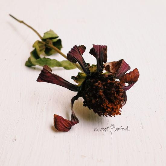 Happy Weekend... Wilted Flower Dry Flower  Eyem Best Shots