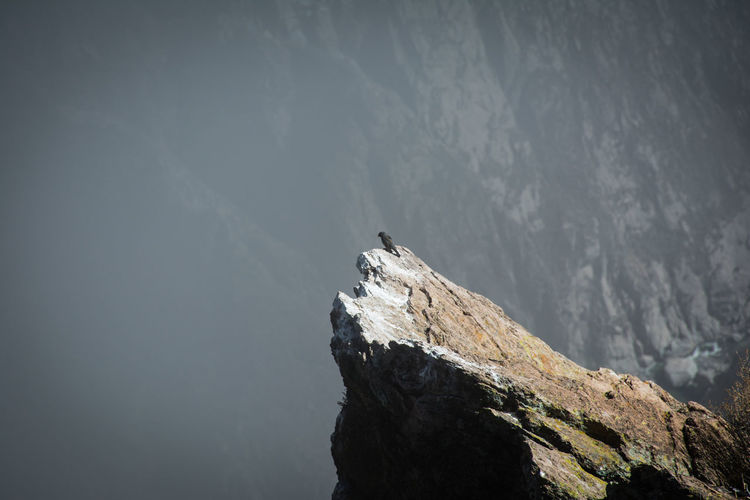 High angle view of bird on edge of rocky cliff