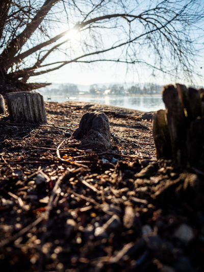 Tree Land Nature Forest Plant Selective Focus No People Day Wood - Material Tranquility Bare Tree Field Close-up Outdoors Log Sky WoodLand Tranquil Scene Non-urban Scene Timber Surface Level Wood Dead Plant Bark