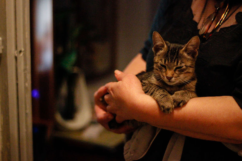 Cat on hand at home
